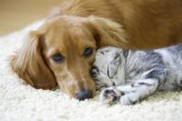 犬と猫(イメージ画像)